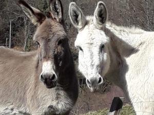 Ferme Rosane | Chambres d'hôtes Ariège Pyrénées - Nos ânes