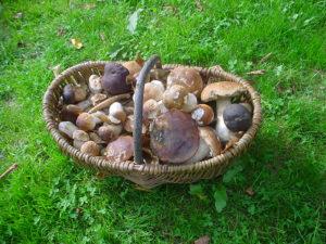 Ferme Rosane | Chambres d'hôtes Ariège Pyrénées - Récolte de champignons