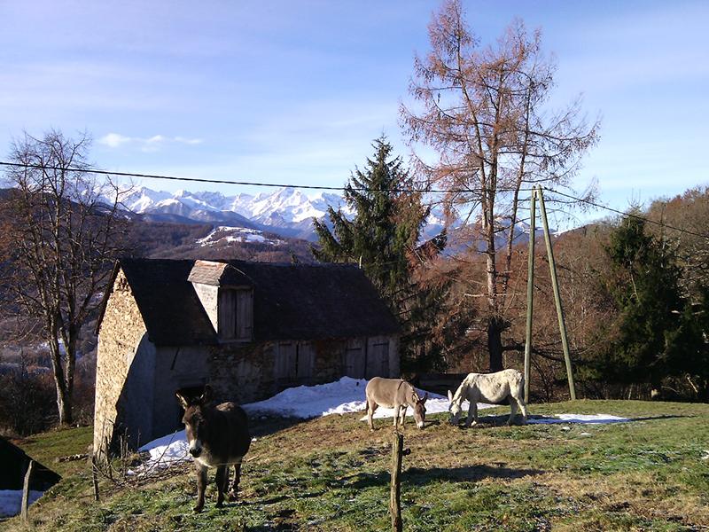 activité de la Ferme Rosane, le pré, les ânes