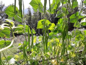 Ferme Rosane | Chambres d'hôtes Ariège Pyrénées - Récolte bio